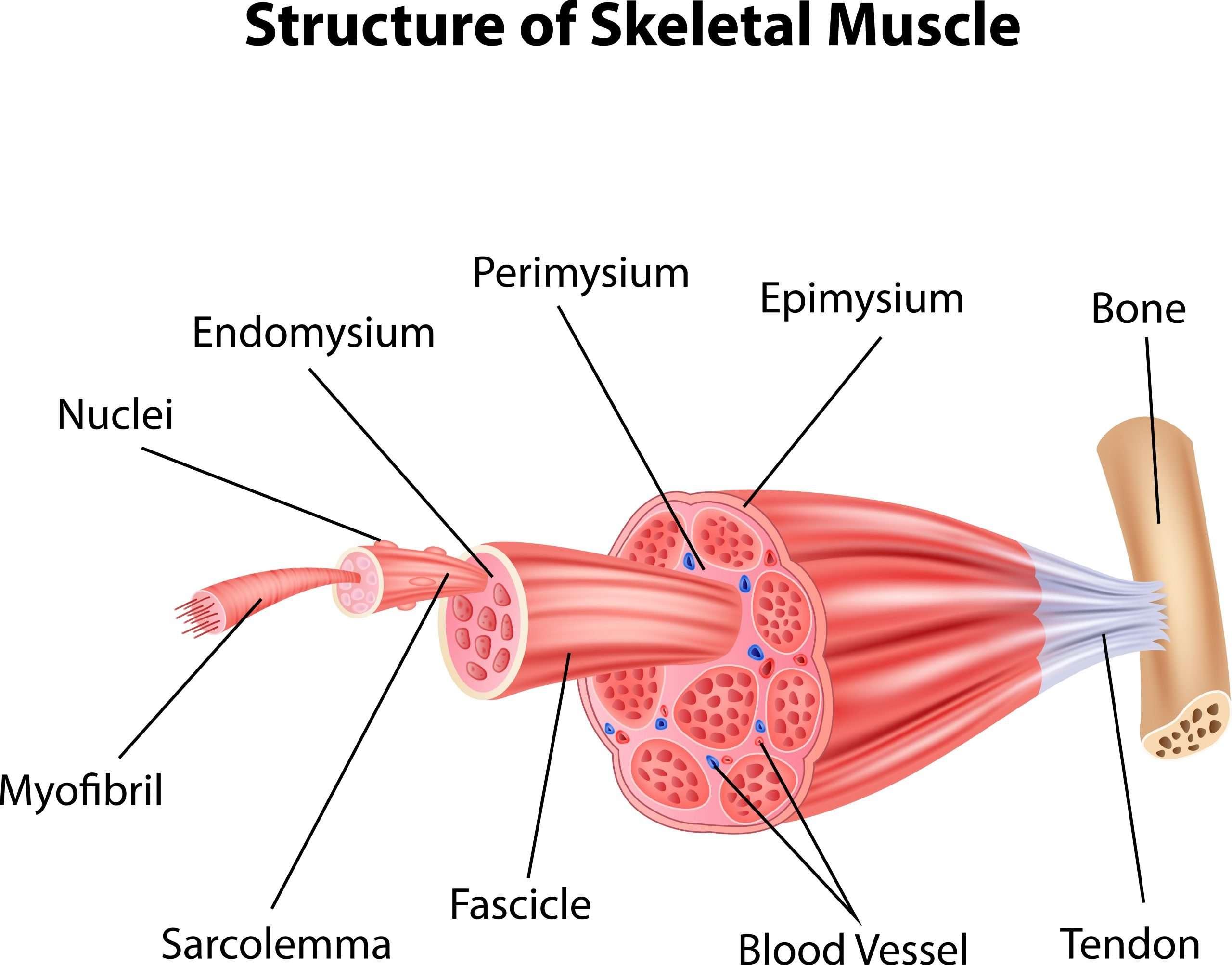 Muscular Disease